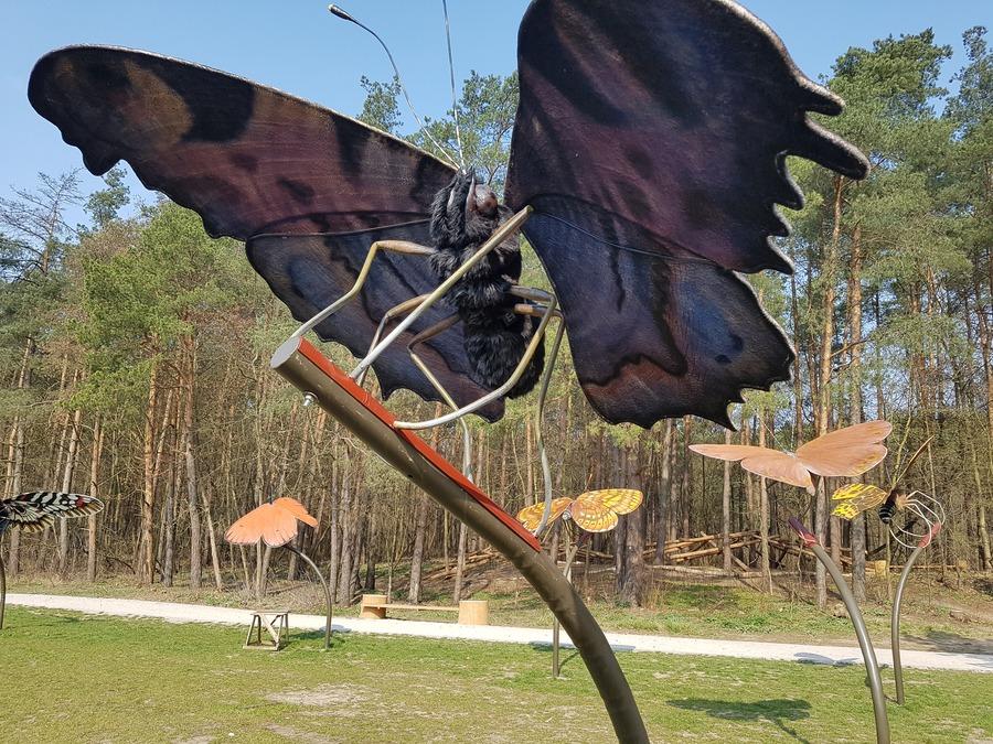 łąka motyli pomiechówek