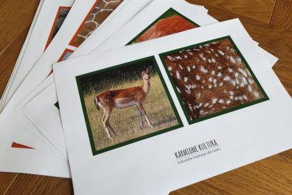 karty edukacyjne diy zwierzęta