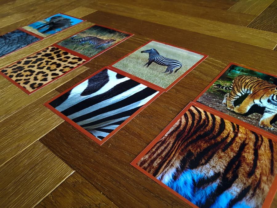 karty ze zwierzętami montessori